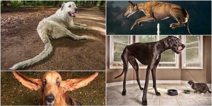 15 pasa koji su ušli u Ginisovu kjnigu rekorda