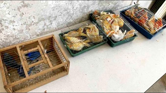 Zaplenjeno 36 pevajućih papagaja na Horgošu