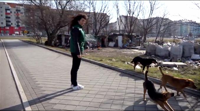 Zelena patrola o napuštenim psima: Nisu oni krivi što su na ulici – to nije njihov izbor (VIDEO)