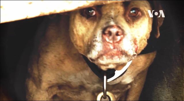 SAD će surovost nad životinjama kažnjavati sa do sedam godina zatvora