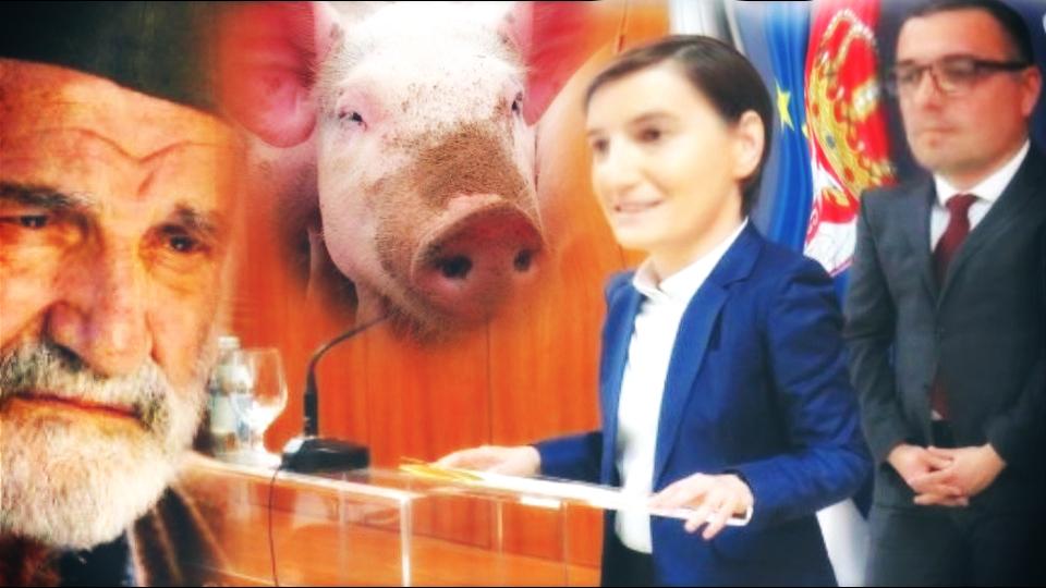 Vlast ne radi u interesu seljaka, već lobija koji se bavi proizvodnjom i trgovinom vakcina protiv svinjske kuge